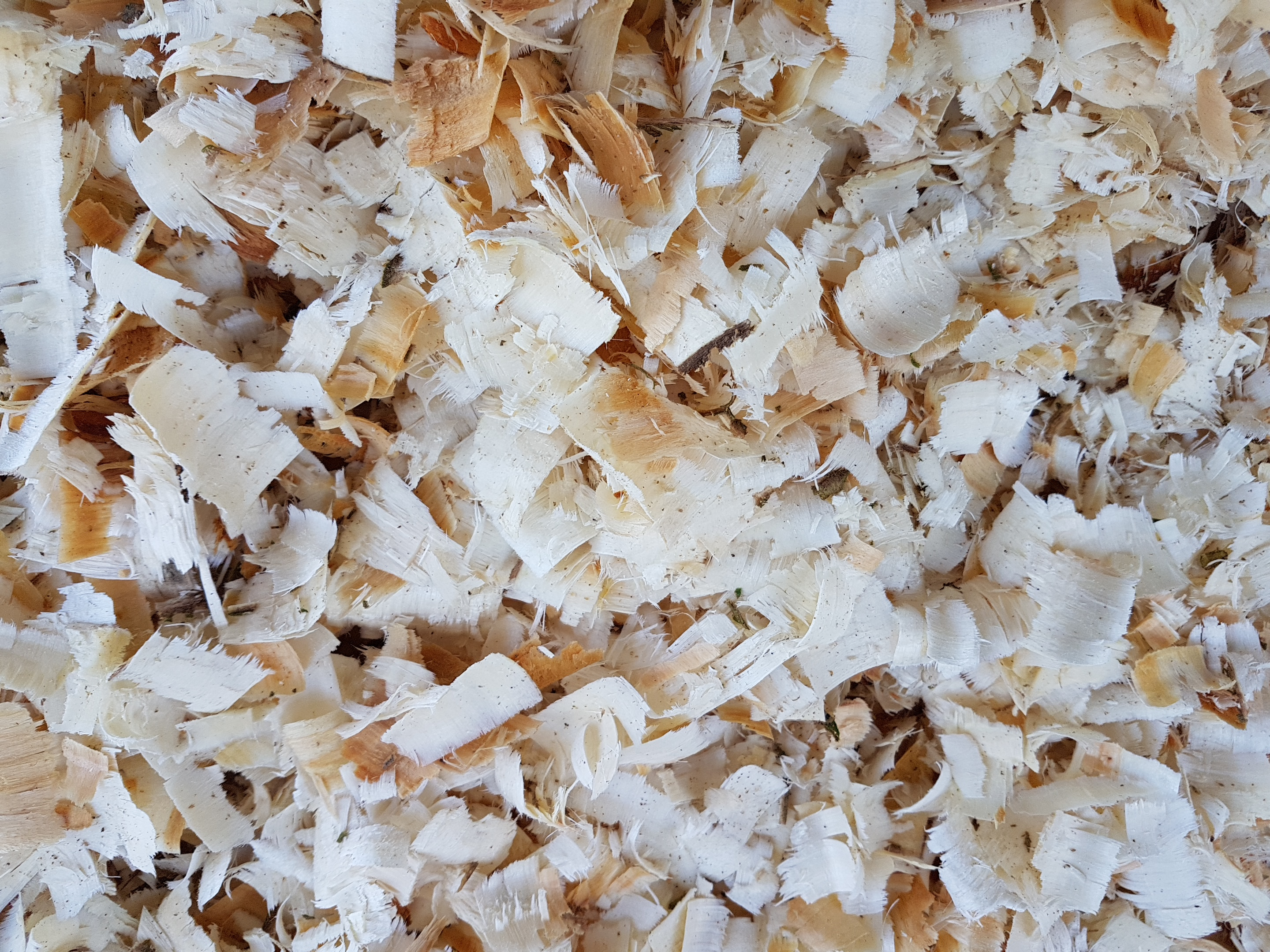 equi-bed-shavings-large-flake-